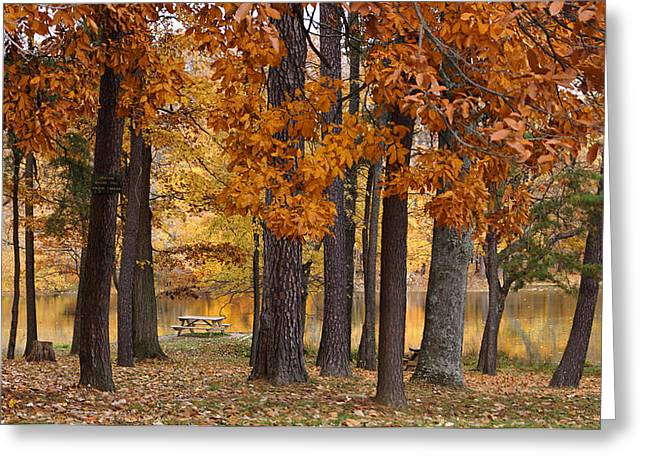 Indiana Autumn Greeting Cards - Autumn View Greeting Card by Sandy Keeton