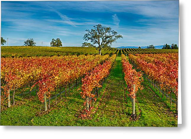 Napa Greeting Cards - Autumn Vineyard At Napa Valley Greeting Card by Panoramic Images