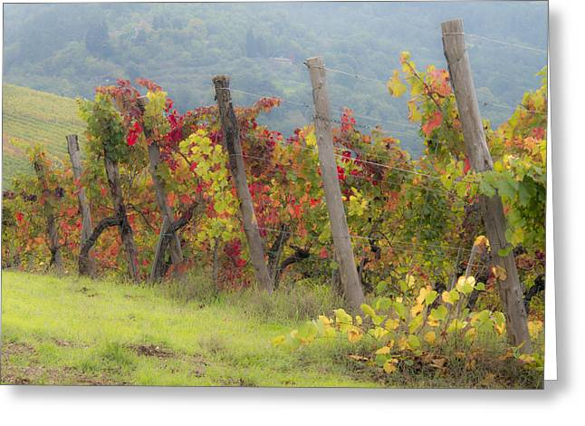 Autumn Vineyard Greeting Card by Eggers   Photography
