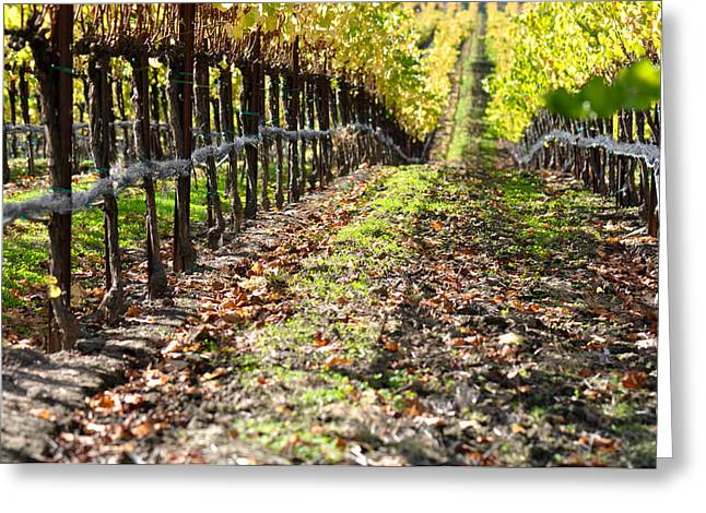 Grapevine Autumn Leaf Greeting Cards - Autumn Vineyard in Napa Valley Greeting Card by Brandon Bourdages