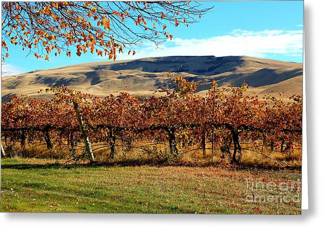Yakima Valley Greeting Cards - Autumn Vineyard in the Valley Greeting Card by Carol Groenen