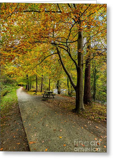 Autumnal Greeting Cards - Autumn Walk Greeting Card by Adrian Evans