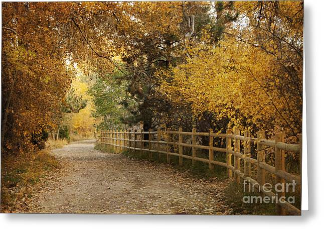 Fallen Leaves Greeting Cards - Autumn Walk Greeting Card by Juli Scalzi