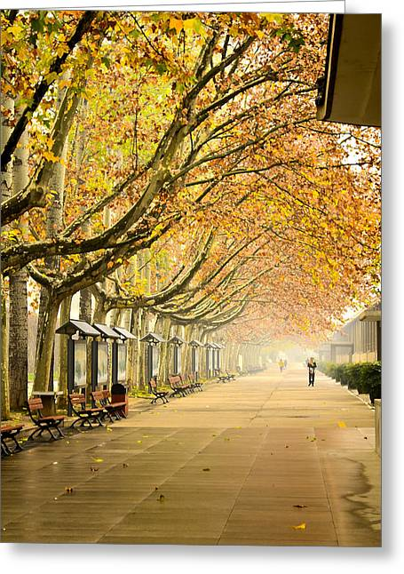 Daubs Greeting Cards - Autumn Walk Xian China Greeting Card by Sally Ross