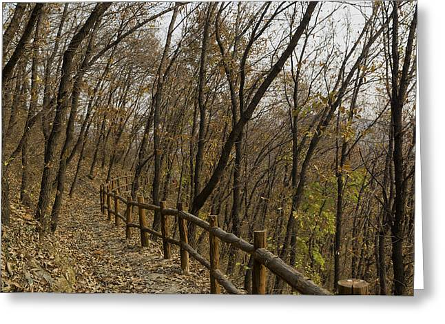 Yun Qing Fu Greeting Cards - Autumn Walking Trail Greeting Card by Qing