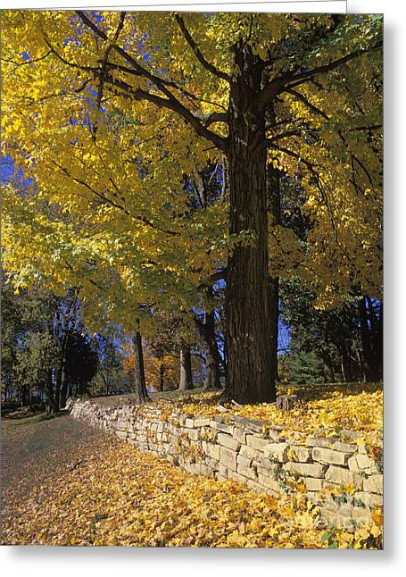 Indiana Autumn Greeting Cards - Autumn Wall - FM000082 Greeting Card by Daniel Dempster