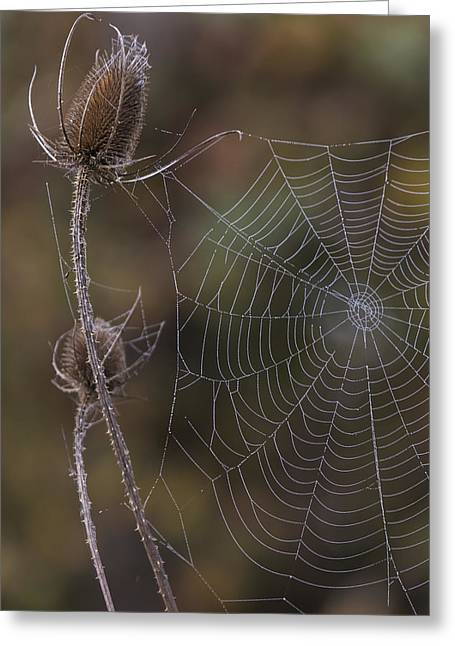 Dew Covered Greeting Cards - Autumn Web Greeting Card by Angie Vogel