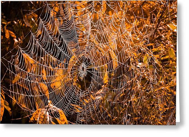 Autumn Web Greeting Card by Brian Stevens