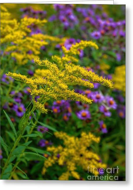 A Summer Evening Greeting Cards - Autumn-Wildflowers-Goldenrod Greeting Card by Henry Kowalski