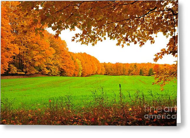 Fall Trees Greeting Cards - Autumn Window View Greeting Card by Terri Gostola