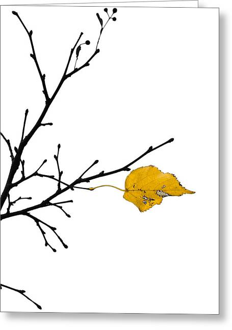 Autumn Winds - Featured 3 Greeting Card by Alexander Senin