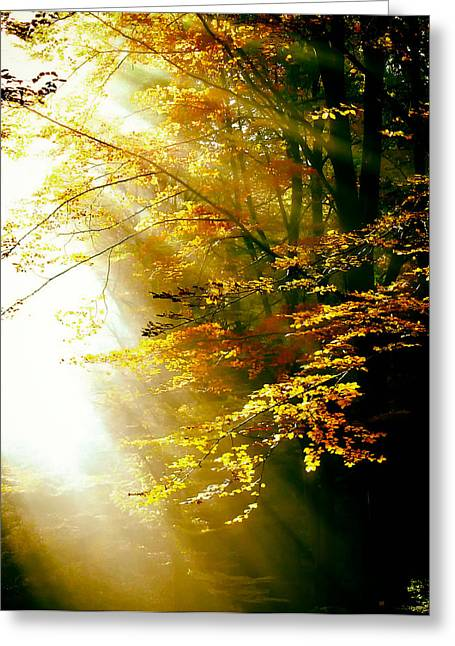 Crisp Greeting Cards - Autumn Wonders Greeting Card by Mountain Dreams