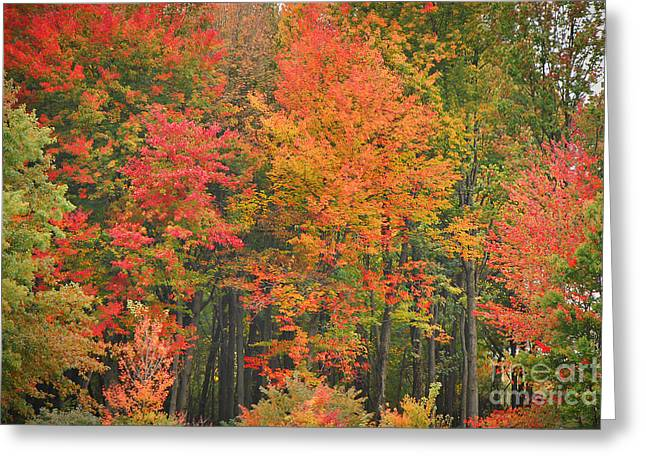 Indiana Autumn Greeting Cards - Autumn Woods Greeting Card by Mary Carol Story