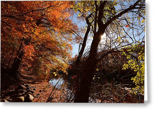 Red Abstracts Photographs Greeting Cards - Autumnal Break Greeting Card by Lourry Legarde