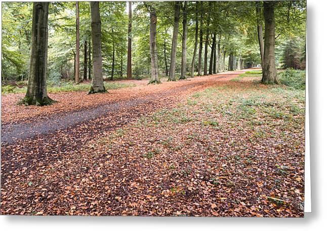 Herfst Greeting Cards - Autumnal colors in the wood Greeting Card by Ruud Morijn