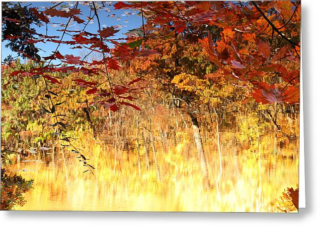 Autumnal Fire Greeting Card by James Hammen