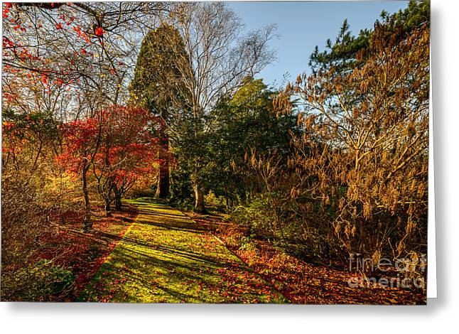 Acer Greeting Cards - Autumnal Forest Greeting Card by Adrian Evans