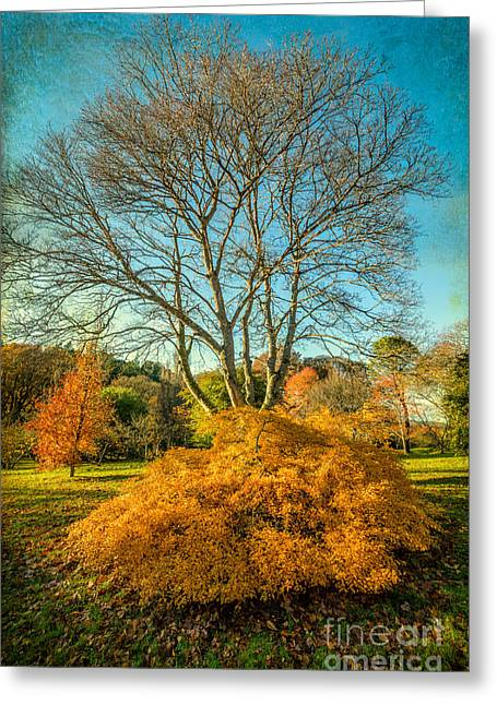 Acer Greeting Cards - Autumnal Garden Greeting Card by Adrian Evans