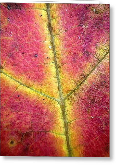 Red Leaves Digital Art Greeting Cards - Autumnal Intricacy Greeting Card by Natasha Marco