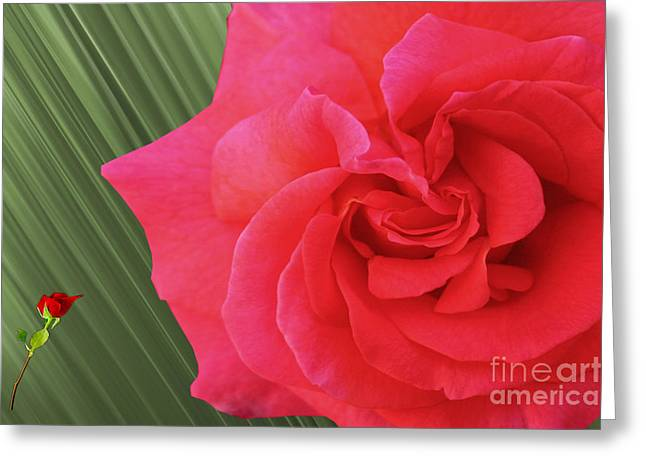 Installation Art Greeting Cards - Autumnal Red Roses Greeting Card by Tina M Wenger