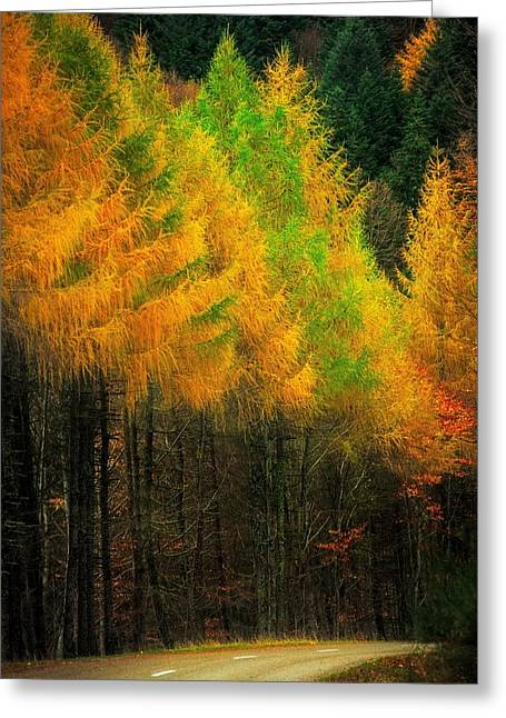 Autumnal Road Greeting Card by Maciej Markiewicz