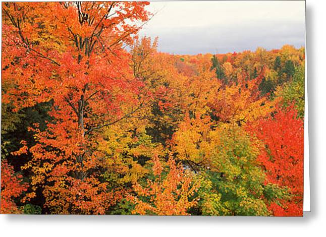 Upper Peninsula Greeting Cards - Autumnal Trees In A Forest, Hiawatha Greeting Card by Panoramic Images
