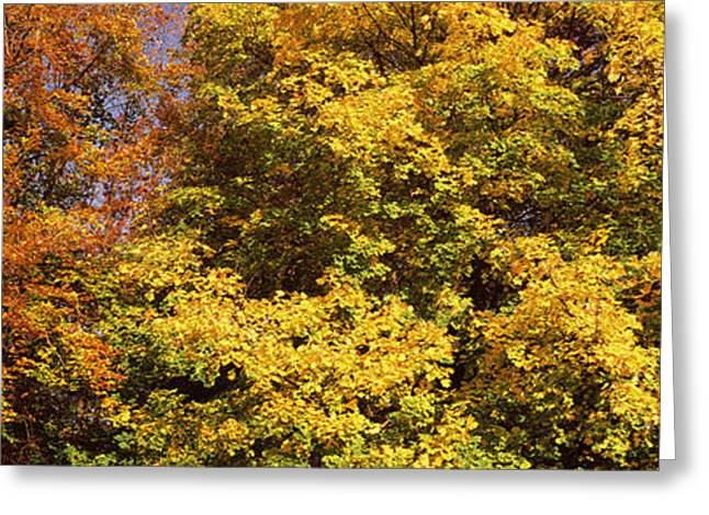 Fall Scenes Greeting Cards - Autumnal Trees In A Park, Ludwigsburg Greeting Card by Panoramic Images
