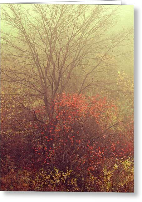 Autumnal Trees In Fog Greeting Card by Jenny Rainbow