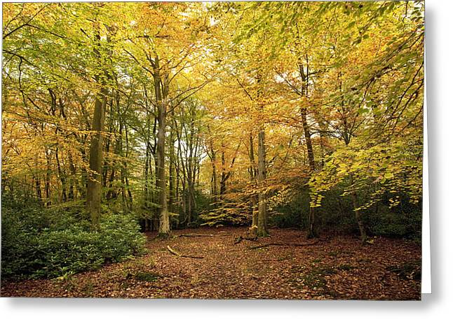 Autumn Scenes Digital Art Greeting Cards - Autumnal Woodland I Greeting Card by Natalie Kinnear