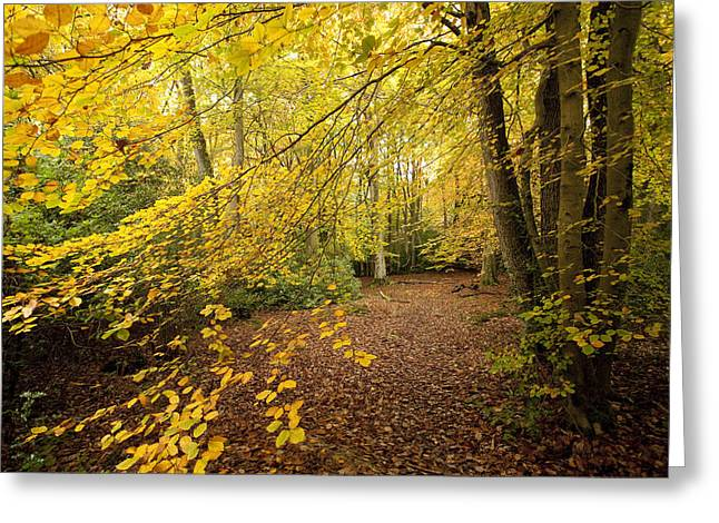 Autumn Prints Greeting Cards - Autumnal Woodland II Greeting Card by Natalie Kinnear