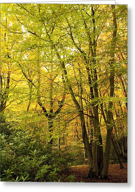 Autumn Scenes Digital Art Greeting Cards - Autumnal Woodland III Greeting Card by Natalie Kinnear
