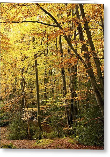 Autumn Scenes Greeting Cards - Autumnal Woodland IV Greeting Card by Natalie Kinnear