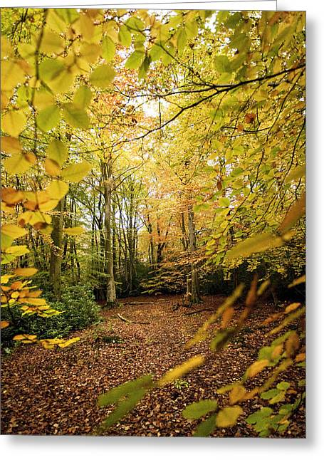 Autumn Scenes Digital Art Greeting Cards - Autumnal Woodland V Greeting Card by Natalie Kinnear
