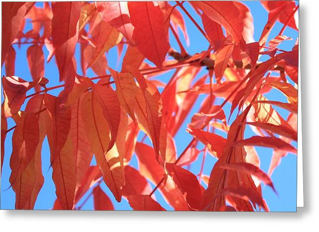Warm Tones Greeting Cards - Autumns Array 20 Greeting Card by Penelope Moore