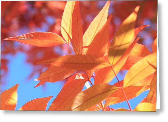 Warm Tones Greeting Cards - Autumns Array 21 Greeting Card by Penelope Moore