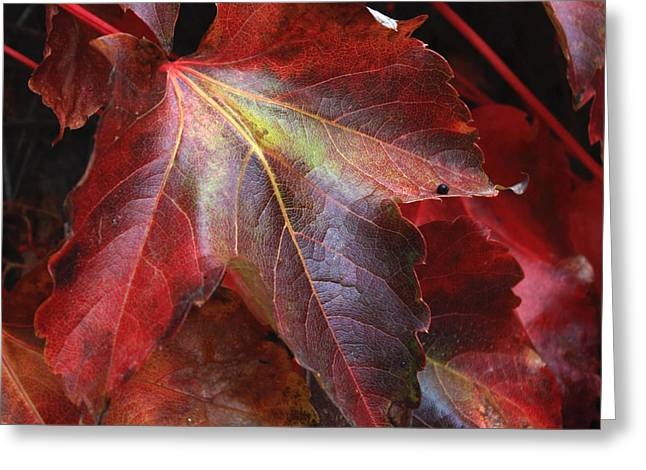 Warm Tones Greeting Cards - Autumns Array 31 Greeting Card by Penelope Moore