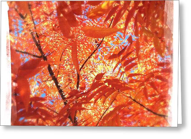 Warm Tones Greeting Cards - Autumns Array 5 Greeting Card by Penelope Moore
