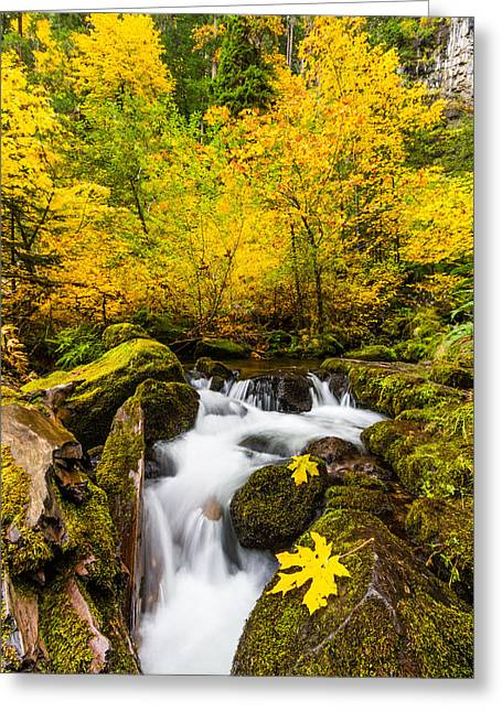 Umpqua River Greeting Cards - Autumns Beginnings Greeting Card by Patricia  Davidson