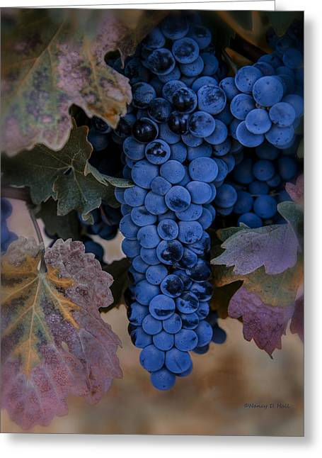 Blue Grapes Greeting Cards - Autumns Bounty Greeting Card by Nancy D Hall