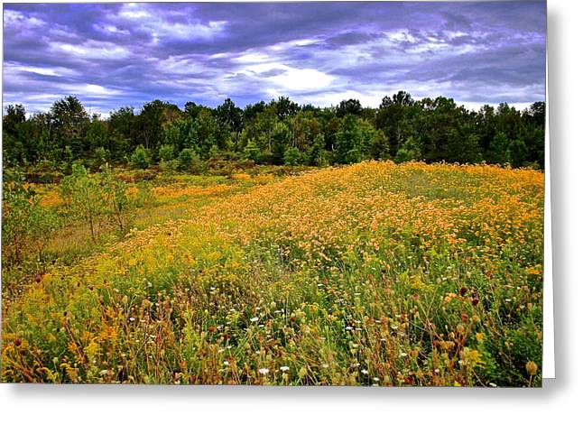 Meadow Willows Greeting Cards - Autumns Brilliance HDR Greeting Card by Frozen in Time Fine Art Photography