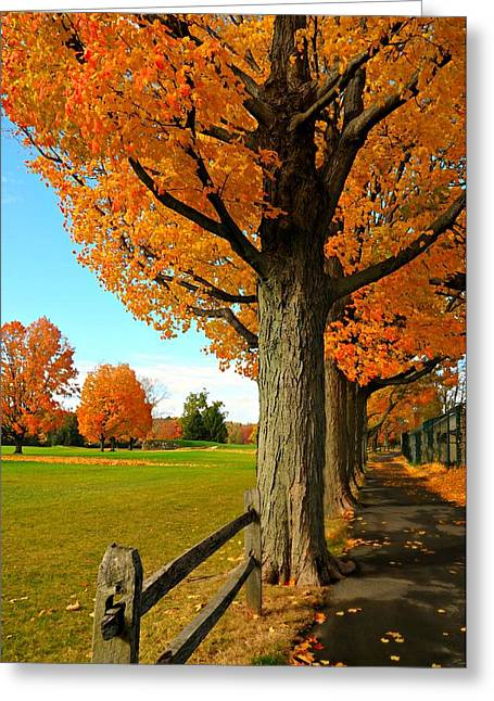 Autumn In The Country Greeting Cards - Autumns Cape Greeting Card by Diana Angstadt