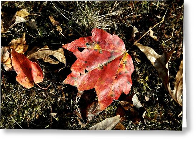 Red Fallen Leave Photographs Greeting Cards - Autumns End Greeting Card by JAMART Photography