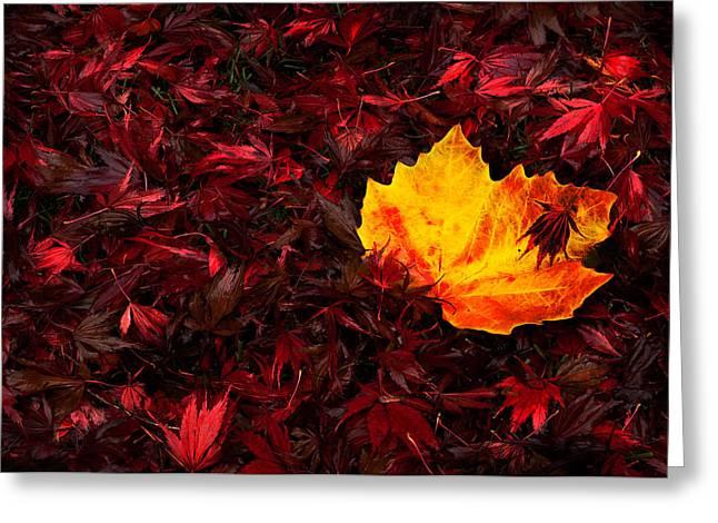 Autumn's Fallen Leaves Greeting Card by Kasandra Sproson
