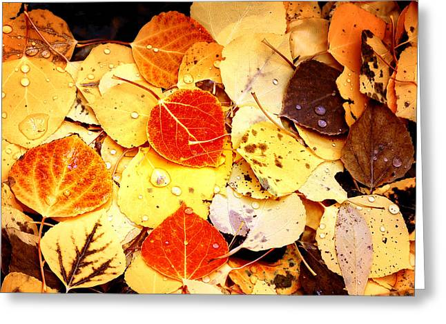 Fallen Leaf Greeting Cards - Autumns Forest Floor Greeting Card by The Forests Edge Photography - Diane Sandoval
