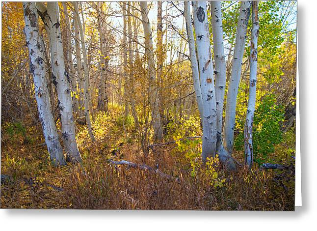 Fall Trees Greeting Cards - Autumns Gentle Hues Greeting Card by Lynn Bauer