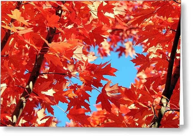 Sienna Greeting Cards - Autumns Glory Greeting Card by Mary Cherry