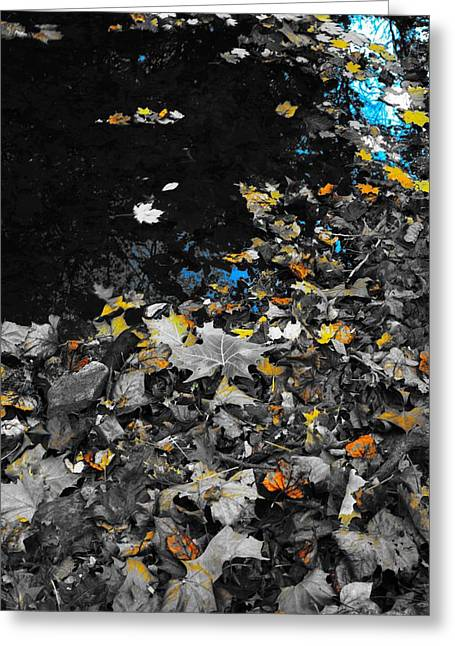 Autumn's Last Color Greeting Card by Photographic Arts And Design Studio