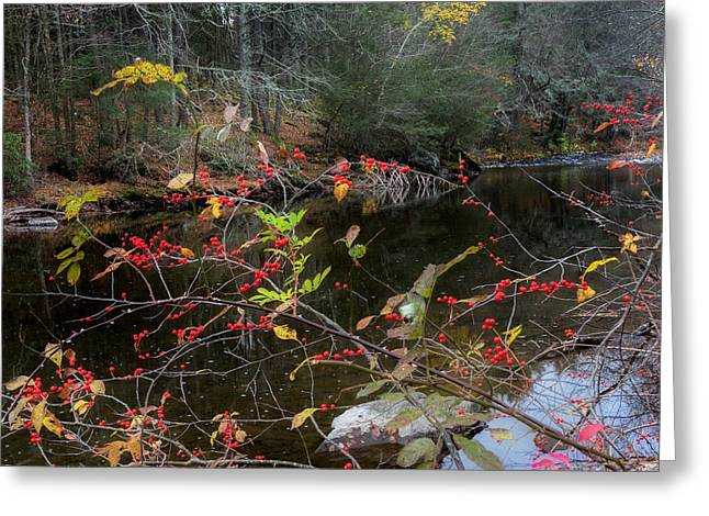 Autumn Landscape Greeting Cards - Autumns Last Stand Square Greeting Card by Bill  Wakeley