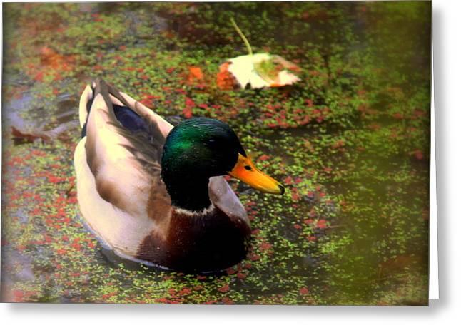 Autumns Mallard Greeting Card by Karen Wiles
