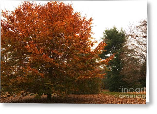 Orange Greeting Cards - Autumns Orange Greeting Card by John Rizzuto